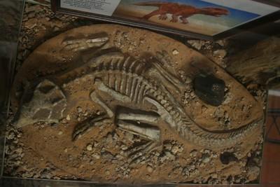 Fossile di un dinosauro