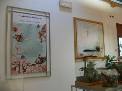 Laboratorio con acquerello regalato da Gianni Servini