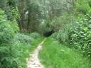 Il percorso nella Golena San Vitale